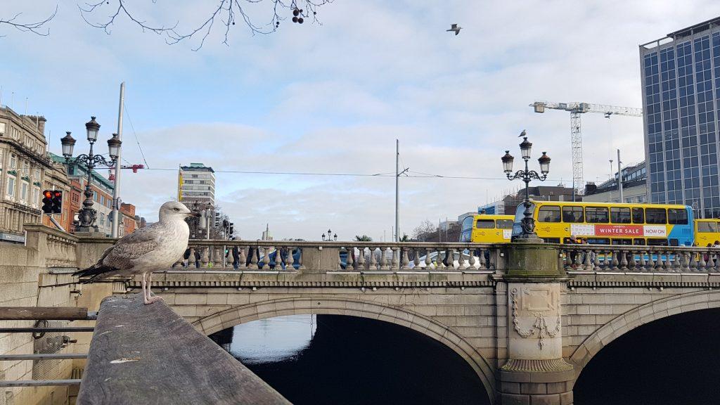 ציפור על גשר בדבלין
